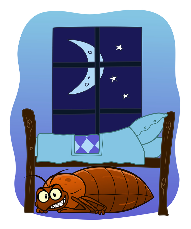 Bed Bug Extermination | Maine Bed Bugs and Pest Control