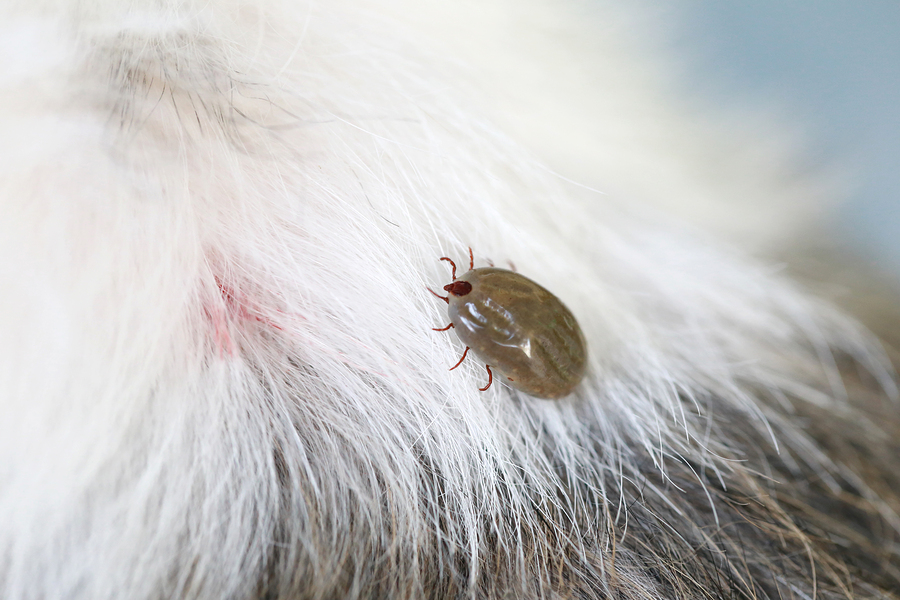 South Maine Tick Exterminator | Maine Beg Bugs and Pest Control