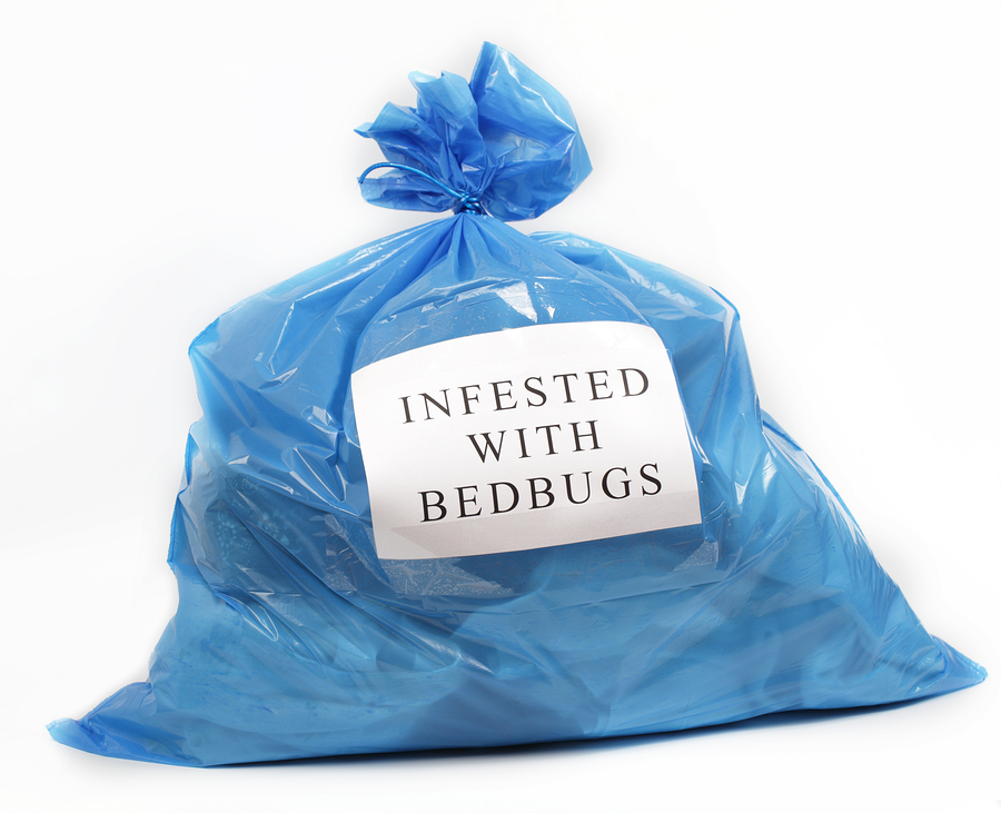 Maine Bed Bug Legislation | Maine Bed Bugs and Pest Control