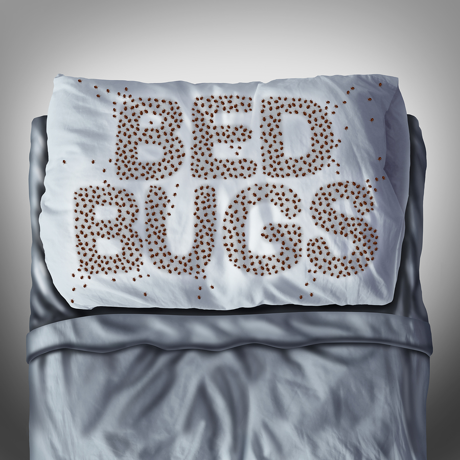 Bed Bugs On Pillow |Maine Bed Bugs And Pest Control