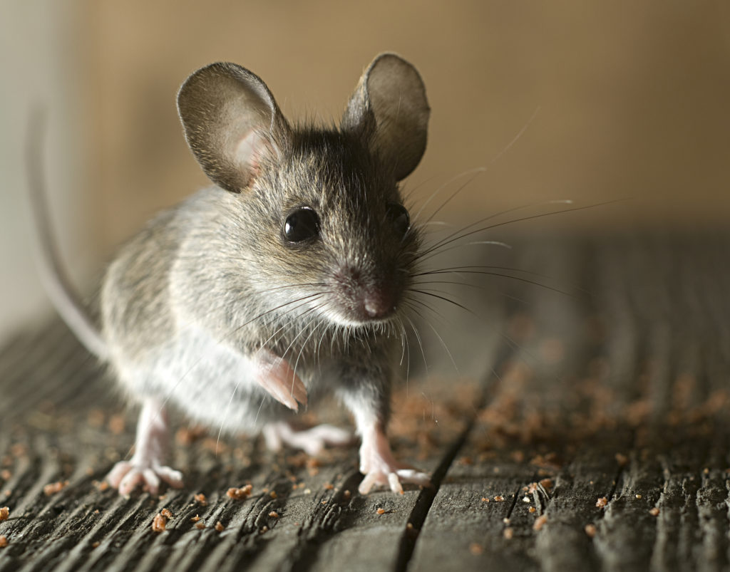 Maine Wildlife Removal | Wildlife Prevention | Southern Maine Pest Control