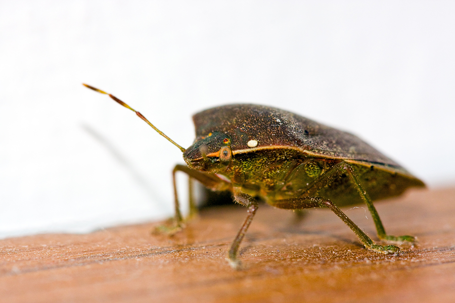Bed Bug Travel Protection and Tips | Maine Bed Bugs and Pest Control