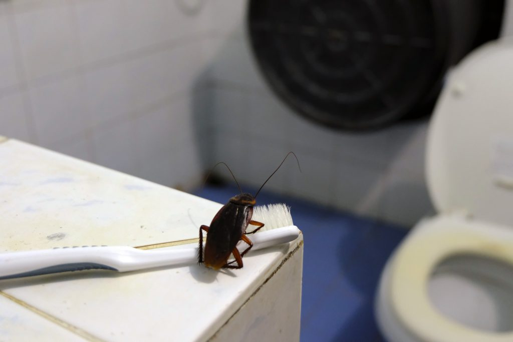 Could Your Portland Home Have Cockroaches? Know the Signs