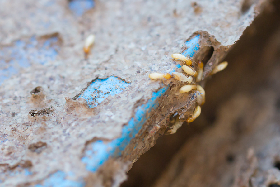 Maine Real Estate Termite Inspection