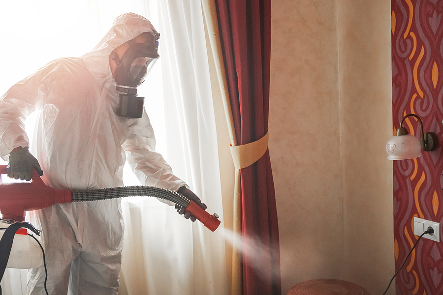 Preparing Your Site for Pest Control Services by Maine Bed Bugs and Pest Control.