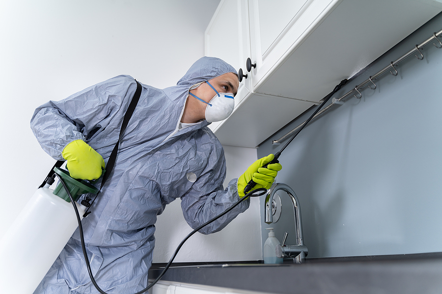 Spring Is the Perfect Time to Consider Scheduled Pest Control Services