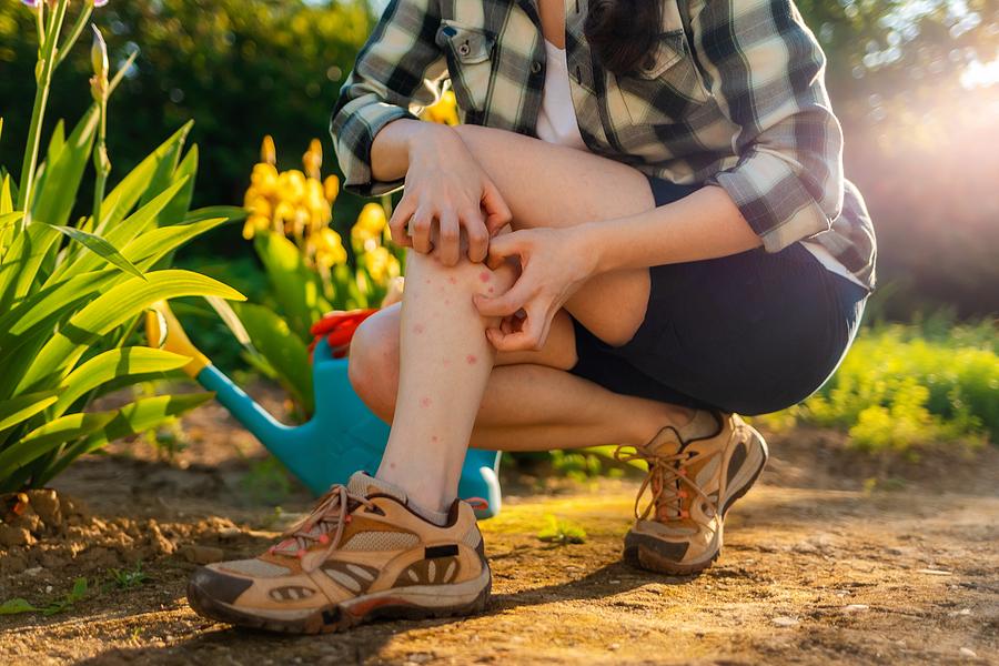 Pests Remedies for Ticks, Blackflies & Mosquitoes