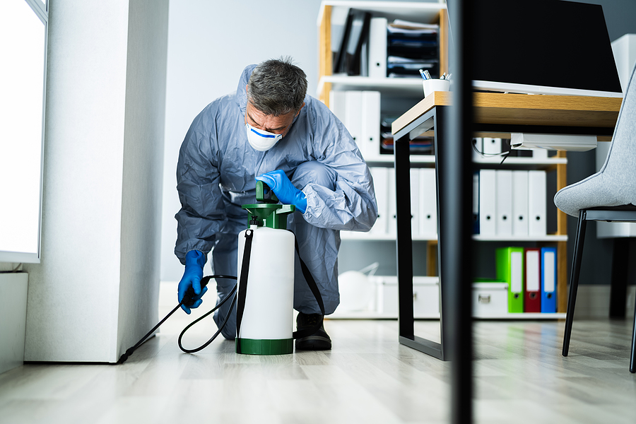 How to Choose a Reliable Pest Control Company
